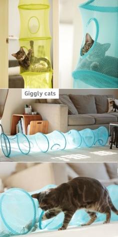 Ikea-Hack für Katzen: Fångst