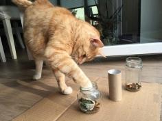 Intelligenzspielzeug für Katzen - Wie Du ein Fummelbrett selbst baust